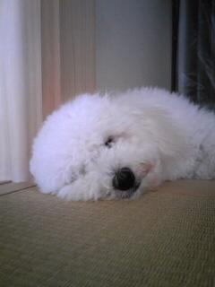 寝てる時は天使(*^o^*)